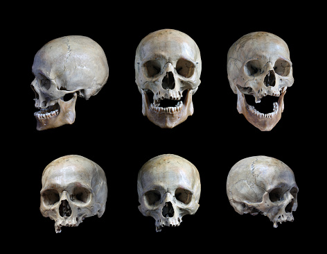 Skull of the person 609723174
