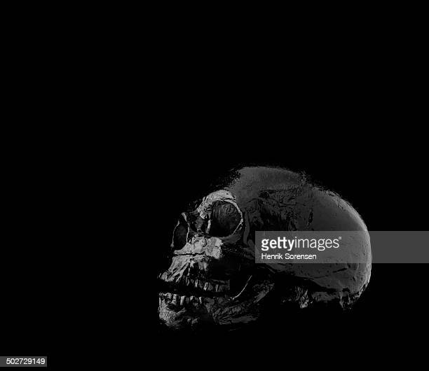 Skull on black backdrop