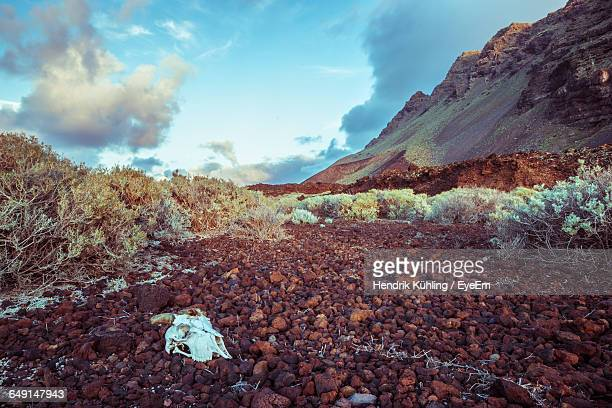 skull on rocks in desert against sky - animal bones stock photos and pictures