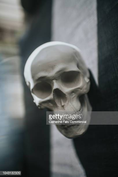 skull - human skeleton stock pictures, royalty-free photos & images