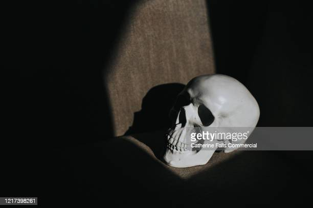 skull - genocide stock pictures, royalty-free photos & images