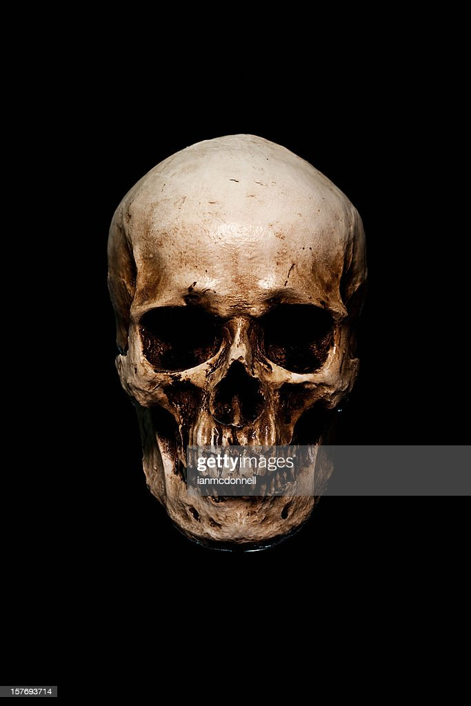 Human Skull Stock Photos and Pictures | Getty Images