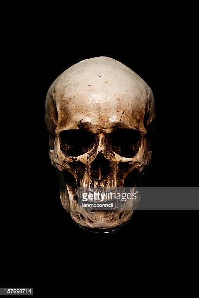 skull - human skeleton stock photos and pictures