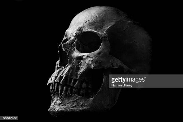 skull - human skull stock pictures, royalty-free photos & images