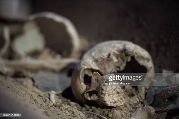 A skull which has been found at a middle aged ritual place is displayed amongst other human bones in a glass cabinet in Mainz Germany 16 May 2017...
