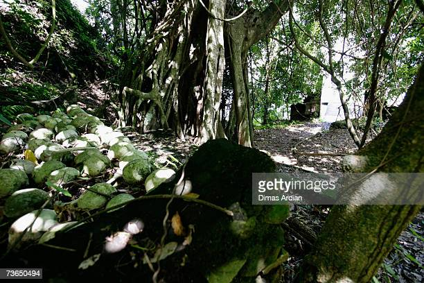 Skulls are positioned at a village cemetery in Kuban, on March 21, 2007 near Trunyan, Bali resort island, Indonesia. Unlike the Balinese people, the...
