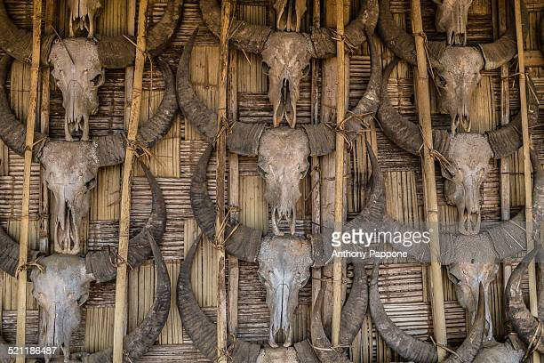 skulls of a buffalo - longhouse stock photos and pictures