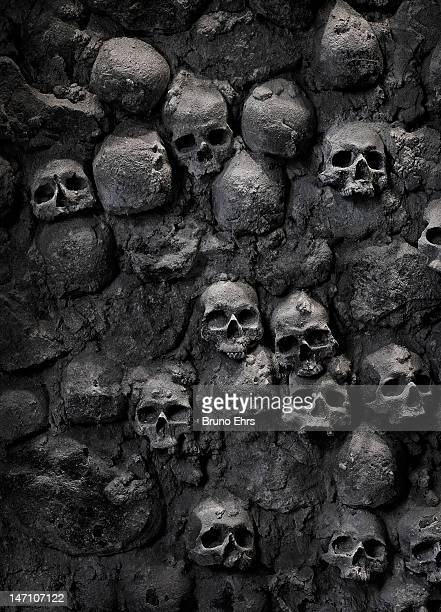 skulls - human skull stock pictures, royalty-free photos & images