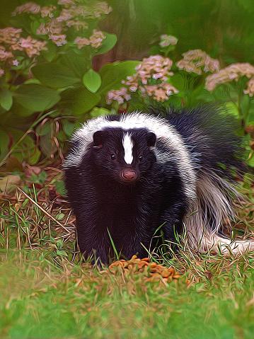 skunk depiction 490587702