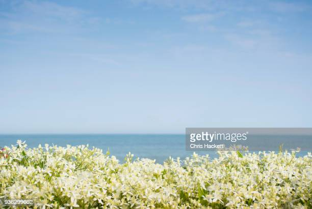 sky above sea and blooming plants - hackett stock photos and pictures