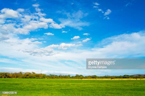 sky and agriculture field background - atmospheric mood stock pictures, royalty-free photos & images
