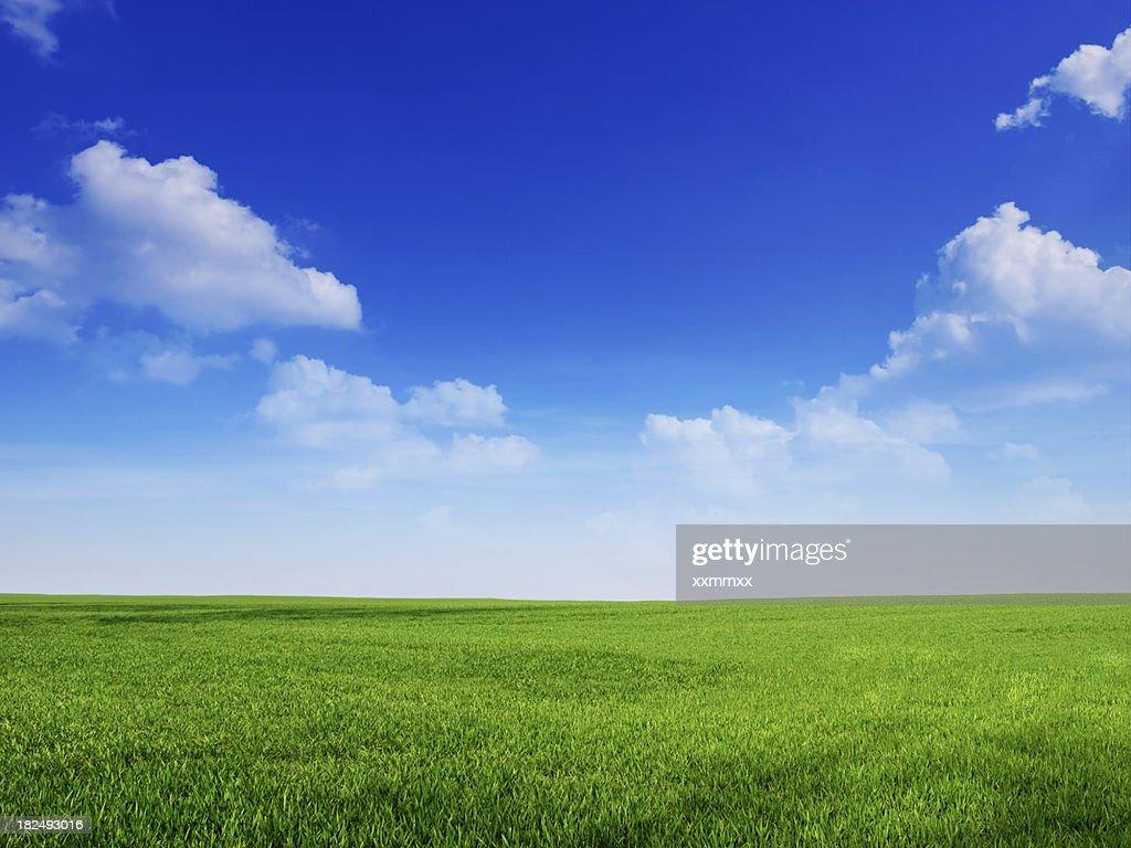Himmel und Gras backround : Stock-Foto