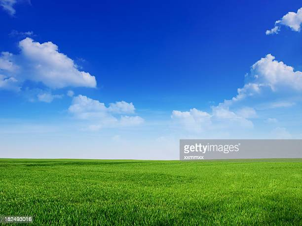 sky and grass backround - green stock pictures, royalty-free photos & images