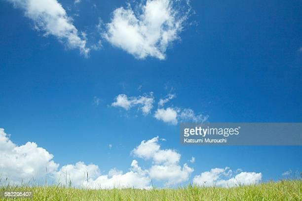 Sky and grassland