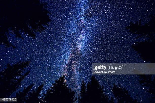 sky and mountain forest at night with milky way galaxy - star stock photos and pictures