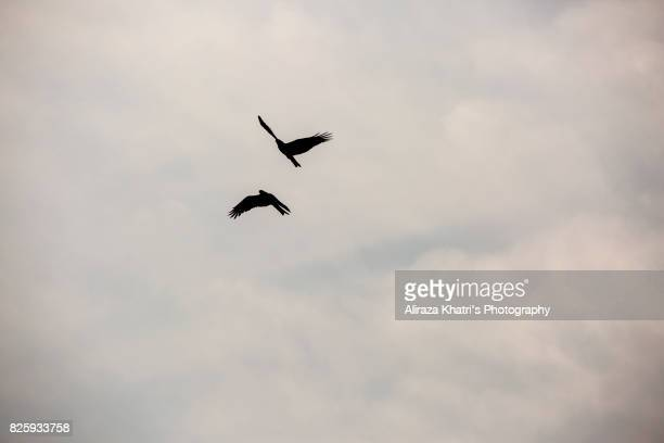 Sky Background and bird Silhouette