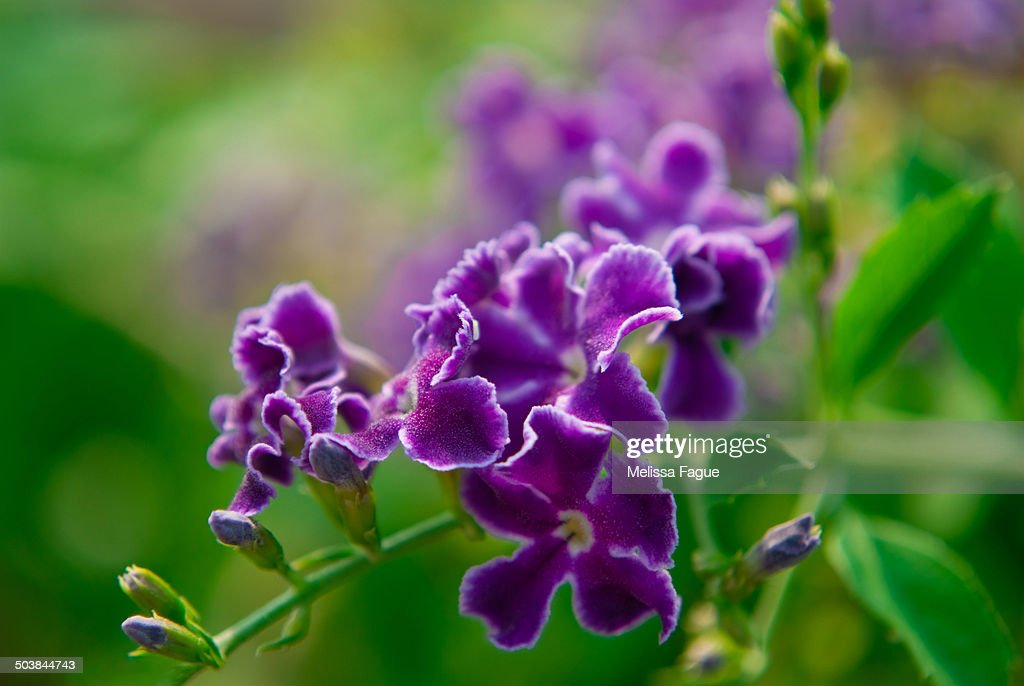 Sky flower : Stock Photo