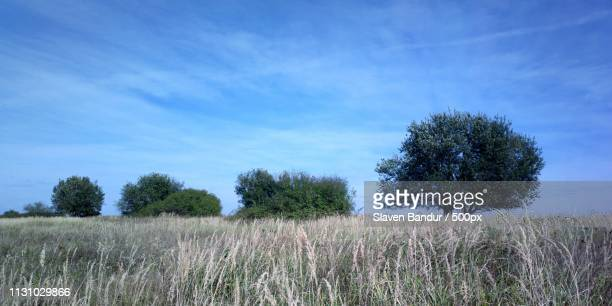 sky is not blue - chemtrails stock-fotos und bilder