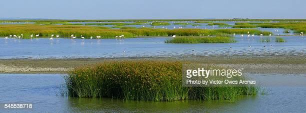 sky, marsh, flamingos and water - marisma fotografías e imágenes de stock