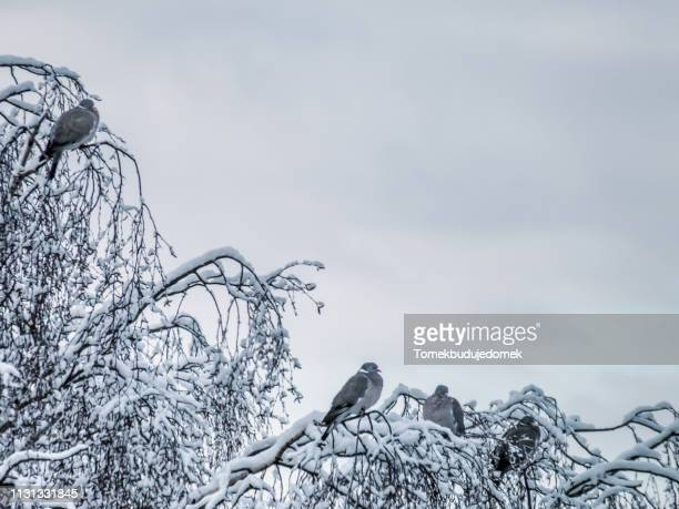 sky - baum stock pictures, royalty-free photos & images