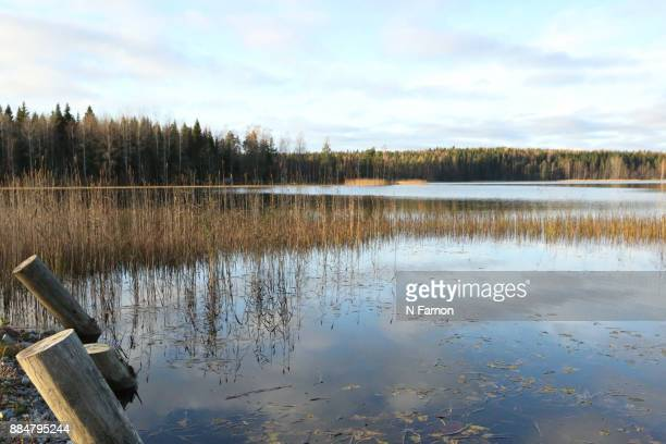 Sky reflected in lake with reeds in Finland.