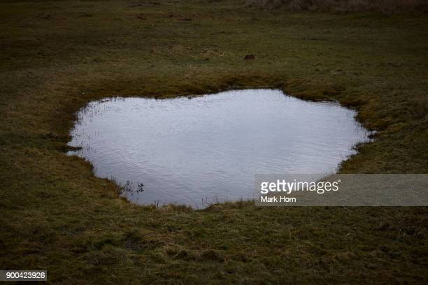 sky reflected in pond in wetlands on Terschelling, West Frisian Island, Netherlands