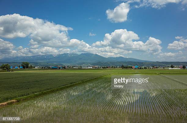 sky reflection on peddy field furano - vsojoy stock pictures, royalty-free photos & images