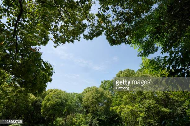 sky through an tree canopy - treetop stock pictures, royalty-free photos & images