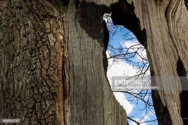 sky through the tree - south wales stock pictures, royalty-free photos & images