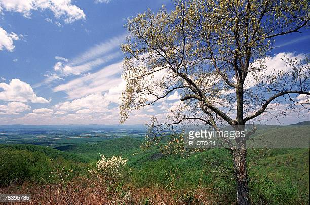 skyline drive, shenandoah national park - skyline drive virginia stock photos and pictures