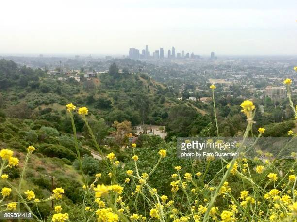 l.a. skyline during super bloom - griffith park stock pictures, royalty-free photos & images
