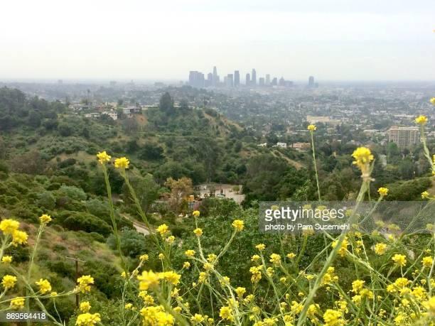 L.A. Skyline During Super Bloom