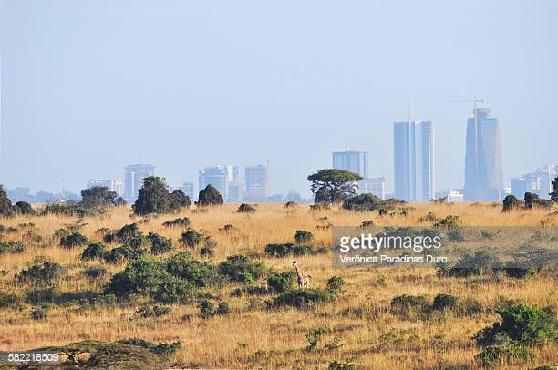 Skyline of Nairobi with giraffe