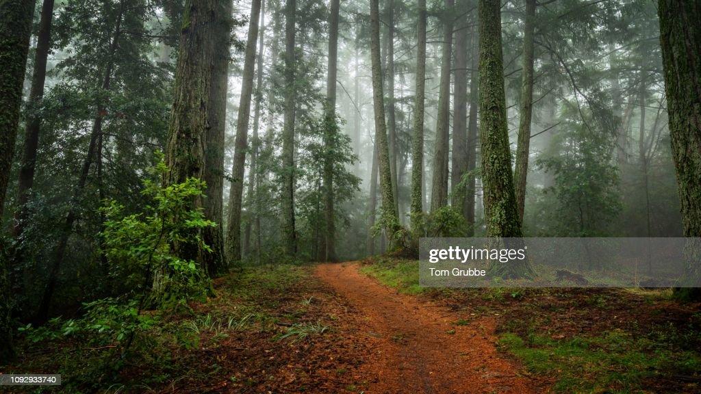Skyline Trail in Fog : Stock Photo