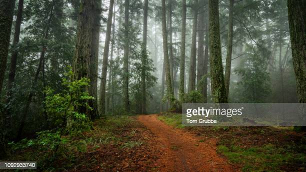 skyline trail in fog - tom grubbe stock pictures, royalty-free photos & images