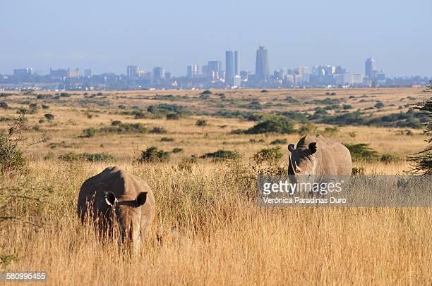 Skyline with Rhinos