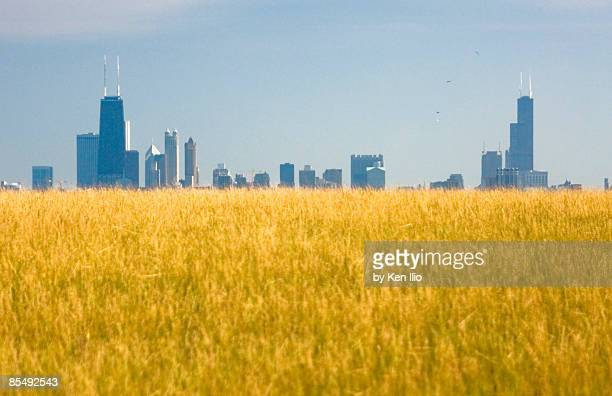 skyscrapers arising from grass - ken ilio stock pictures, royalty-free photos & images