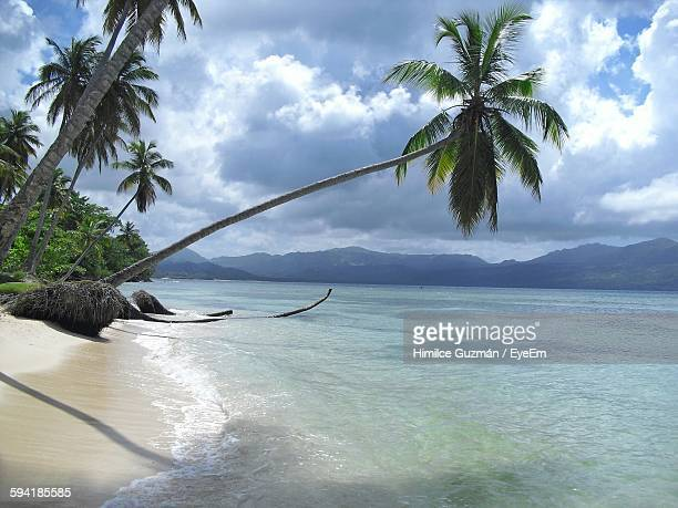 Slanted Palm Tree At Beach Against Cloudy Sky