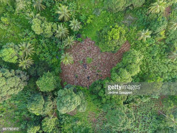 slash and burn agriculture in mayotte - comores photos et images de collection