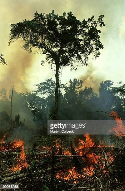 slash and burn, central african rainforest, near wamba, zaire - slash and burn stock pictures, royalty-free photos & images