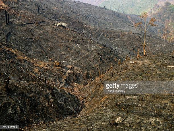 Slash and burn landscape Phongsaly province Lao PDR Swidden cultivation or 'hai' in Lao consists of cutting the natural vegetation leaving it to dry...