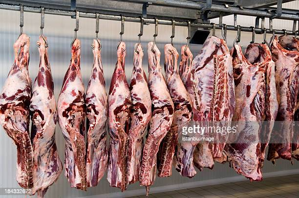slaughter house - dead animal stock pictures, royalty-free photos & images