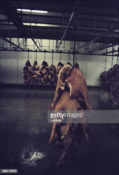 Slaughtered pig bodies photographed in a meat processing factory in Northampton on 14th June 1977