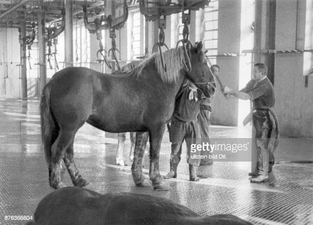 Slaughterhouse in Milan man slaying horse using the sledgehammer Erich Ergenzinger