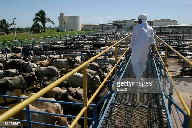 食肉処理場植物 - 食肉処理場 ストックフォトと画像