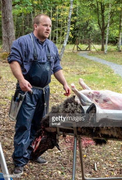 slaughtering sheep outdoors in sweden. butcher stripping down sheep- - slaughterhouse stock pictures, royalty-free photos & images
