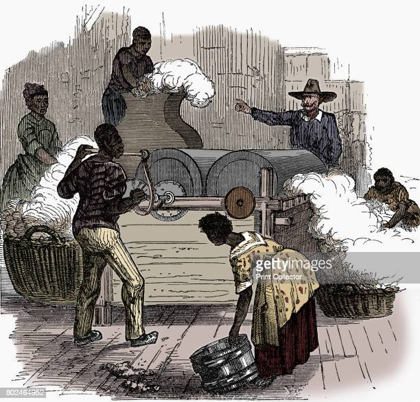 Slave labour on a cotton plantation in the southern states of America 1860 Putting cotton bolls through a whipping press before putting the cotton...