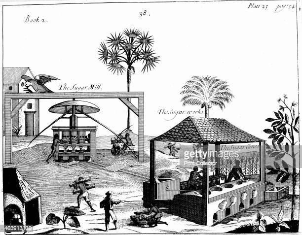 Slave labour on a sugar plantation in the West Indies 1725 Cane is cut and taken to vertical crushing mill powered by oxen The juice extracted flows...