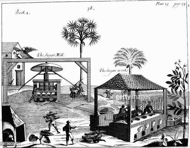Slave labour on a sugar plantation in the West Indies From P Pomet A Compleat History of Drugs 1725 Cane taken to vertical crushing mill powered by...