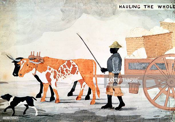 A slave with an oxcart containing the week's cotton pickings New Orleans USA
